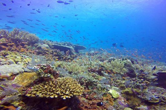 Potápěčské zájezdy